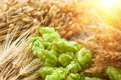 麦芽とホップ.jpgのサムネイル画像